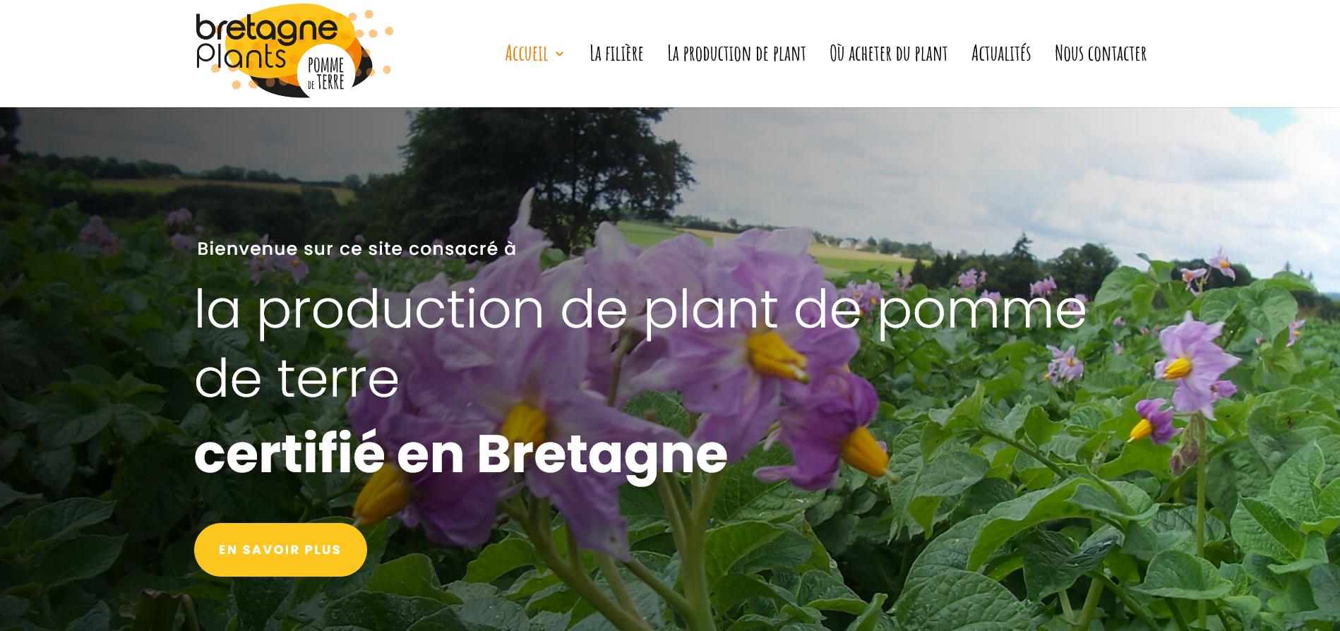 Bretagne Plants Le choix dun plant de qualité