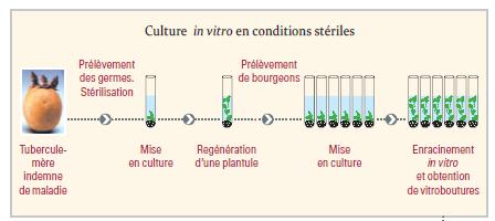 Schema culture IV