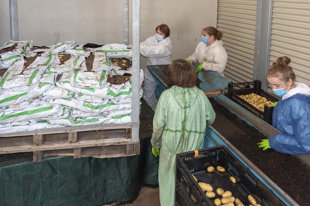 production de souches 1
